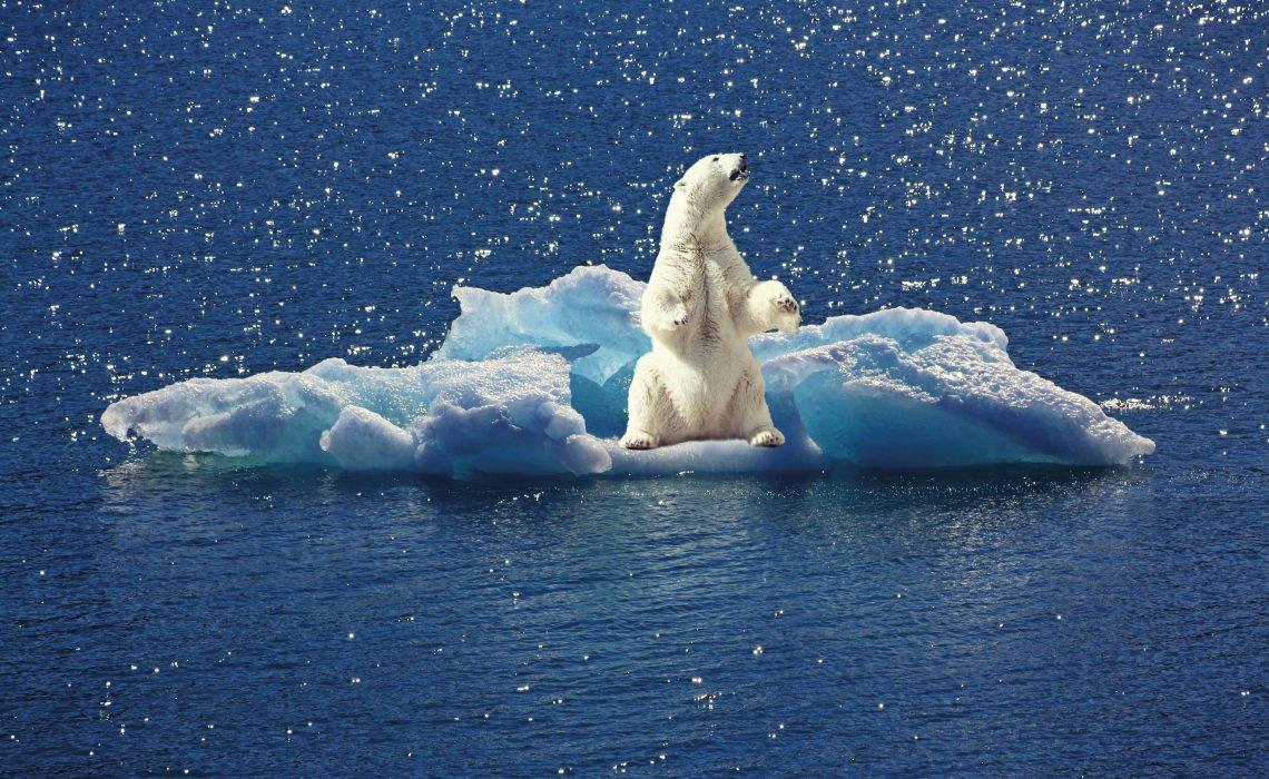 Cool Down. Wie wir die Erderwärmung stoppen können.